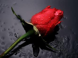 वैलेंटाइन स्पेशलः फोटो पर लिखें दिल की बात, अपने प्यार को करें शेयर