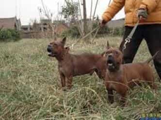 33 हजार साल पहले चीन में पहला कुत्ता बना पालतू