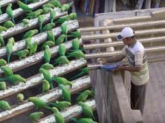 मिलिए इस शख्स से जो भरता है हजारों तोतों का पेट