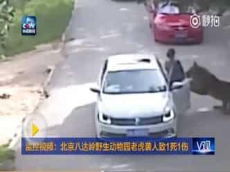 बाघ ने सड़क पर खड़ी महिला को शिकार बनाया