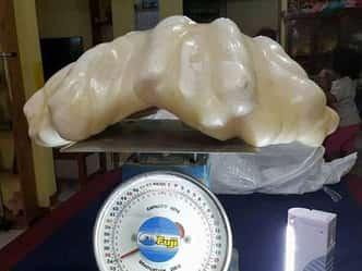 मछुआरे के पास मिला दुनिया का सबसे बड़ा मोती, कीमत 670 करोड़