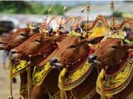 जयपुर में होगा एनिमल ब्यूटी कांटेस्ट, जीतने वाले को मिलेगा इनाम