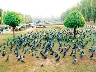 Video : कहां है रंगीन चिड़ियों की बदरंग दुनिया