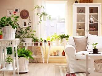 सर्दियों में इन पौधों के जरिए यूं करें घर की हवा शुद्ध