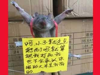 अजब-गजब! चीन में चूहे को दी गई चोरी की सजा, Photo हुई Viral