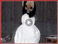 FUNNY VIDEO: पांडा की शैतानियां देखकर अपनी हंसी नहीं रोक पाएंगे आप