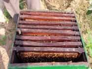 इंसानों की यह हरकत फेल कर देगी मधुमक्खियों का कुदरती जीपीएस