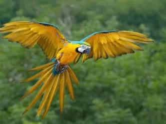 VASTU: पिंजरे में बंद पक्षी हो सकता है पैसों के नुकसान का कारण