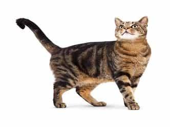 बिल्ली जासूसःबिल्ली करती थी रूस की जासूसी, US ने खर्चे थे 1000 करोड़