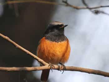देखें पक्षियों की अद्भुत तस्वीरें