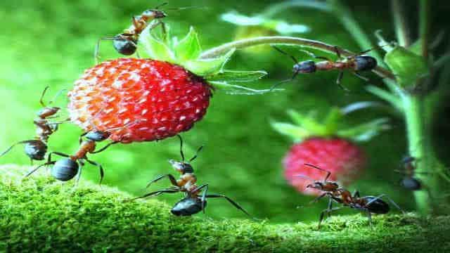 अजब-गजब: 20 गुना भारी वजन उठाता है यह नन्हा सा जीव