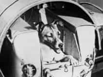 60 years to Laika the dog's journey into space
