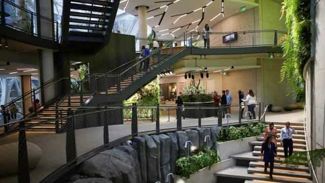 Amazon Designed Huge Tropical Forest At His Head Office In Seatle