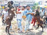 शेरखान के आगे नहीं चली सुल्तान की दबंगई