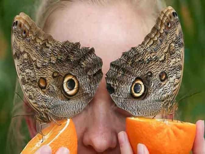 लंडन के नेचुरल हिस्ट्री म्यूजियम में लगी तितलियों की प्रदर्शनी, देखें तस्वीरें