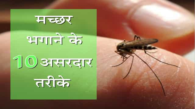 10 natural health and home remedies for mosquito bites
